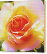 Tjs Rose A Glow Wood Print
