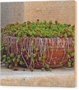 Tlaquepaque Potted Greens Wood Print