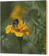 To Be Or Not To Bee Wood Print