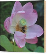 To Bee A Flower Wood Print