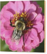 To Bee Or Not To Bee Wood Print