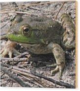 Toad 1 Wood Print