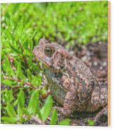 Toad In The Grass Wood Print