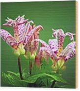 Toad Lilies Wood Print
