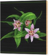 Toad Lily Wood Print