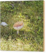 Toadstool Grows On A Forest Floor. Wood Print
