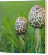 Toadstools Wood Print