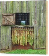 Tobacco Barn Wood Print by Ron Morecraft