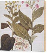 Tobacco Rustica, 1613 Wood Print