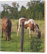 Tobiano And Bay Horses Wood Print