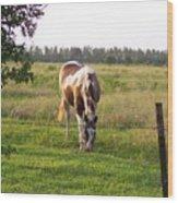 Tobiano Horse In Field Wood Print