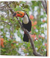 Toco Toucan Wood Print