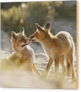 Togetherness - Mother And Kit Moment Wood Print