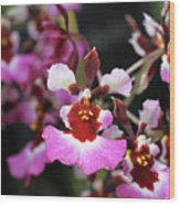 Tolumnia Pink Panther Orchid Wood Print