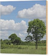 Tolworth Court Nature Reserve In Surrey Wood Print