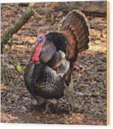 Tom The Turkey Wood Print