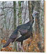 Tom Turkey Early Moning 1 Wood Print