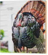 Male Turkey Wood Print