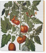 Tomato & Watermelon 1613 Wood Print