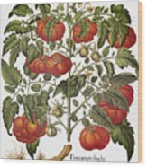 Tomato, 1613 Wood Print