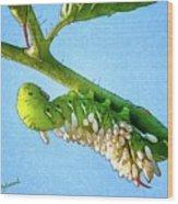 Tomato Hornworm Wood Print