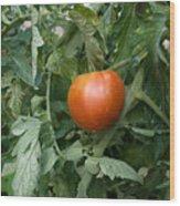 Tomato Plants In A Nebraska Garden Wood Print