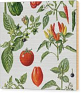 Tomatoes And Related Vegetables Wood Print by Elizabeth Rice