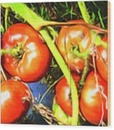 Tomatoes Hanging Like Grapes From Vines Go1 3711a3 Wood Print