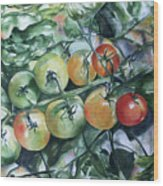 Tomatoes In Dad's Garden Wood Print