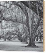 Tomotley Plantation Oaks Wood Print