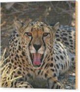 Tongue And Cheek Cheetah Wood Print