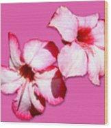Too Pink Wood Print