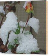 Too Soon Winter - Yellow Rose Wood Print
