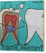 Tooth Anatomy Wood Print