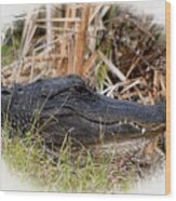 Alligator Toothy Grin 2 Wood Print