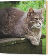 Top Cat Wood Print