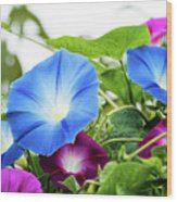 Top Of The Morning Glories Wood Print