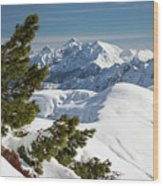 Top Of The Top - Lombardy / Italy Wood Print