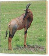 Topi Antelope - Masai Mara - Kenya Wood Print