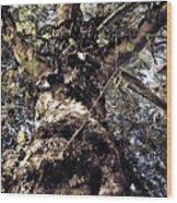 Topiary Wood Print