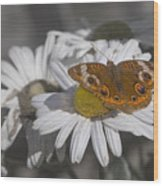 Topsail Butterfly Wood Print