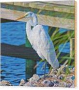 Topsail Egret Wood Print