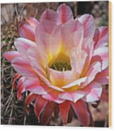 Torch Cactus Flower Wood Print
