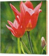 Toronto Tulip Wood Print