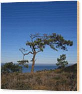 Torrey Pines Tree Wood Print