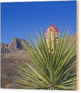 Torrey Yucca Wood Print