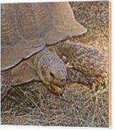Tortoise Eating Lunch In Living Desert Zoo And Gardens In Palm Desert-california  Wood Print