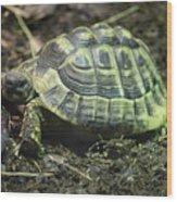 Tortoise Photobomb Wood Print