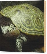 Turtle With A Tale To Tell Wood Print