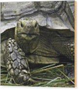 Tortoise's Stare Wood Print